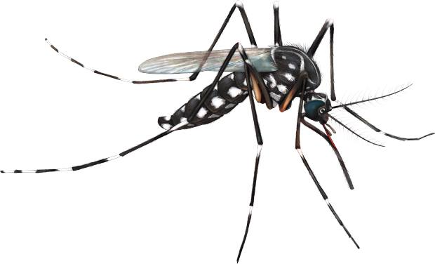 5 Mosquito Facts You Probably Don't Know