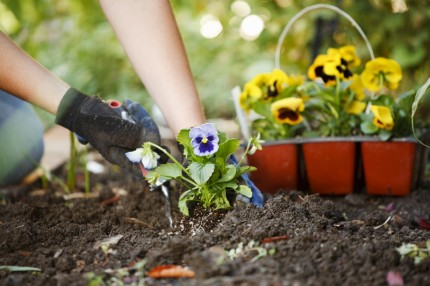 The Basics of Gardening