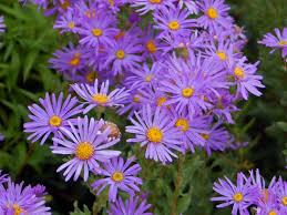 Flowers that Favor the Summer Season