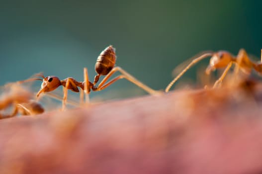 Ants and How to Expel Them from Your Home