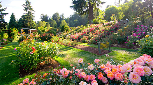 Keeping Your Garden in Excellent Shape this Summer