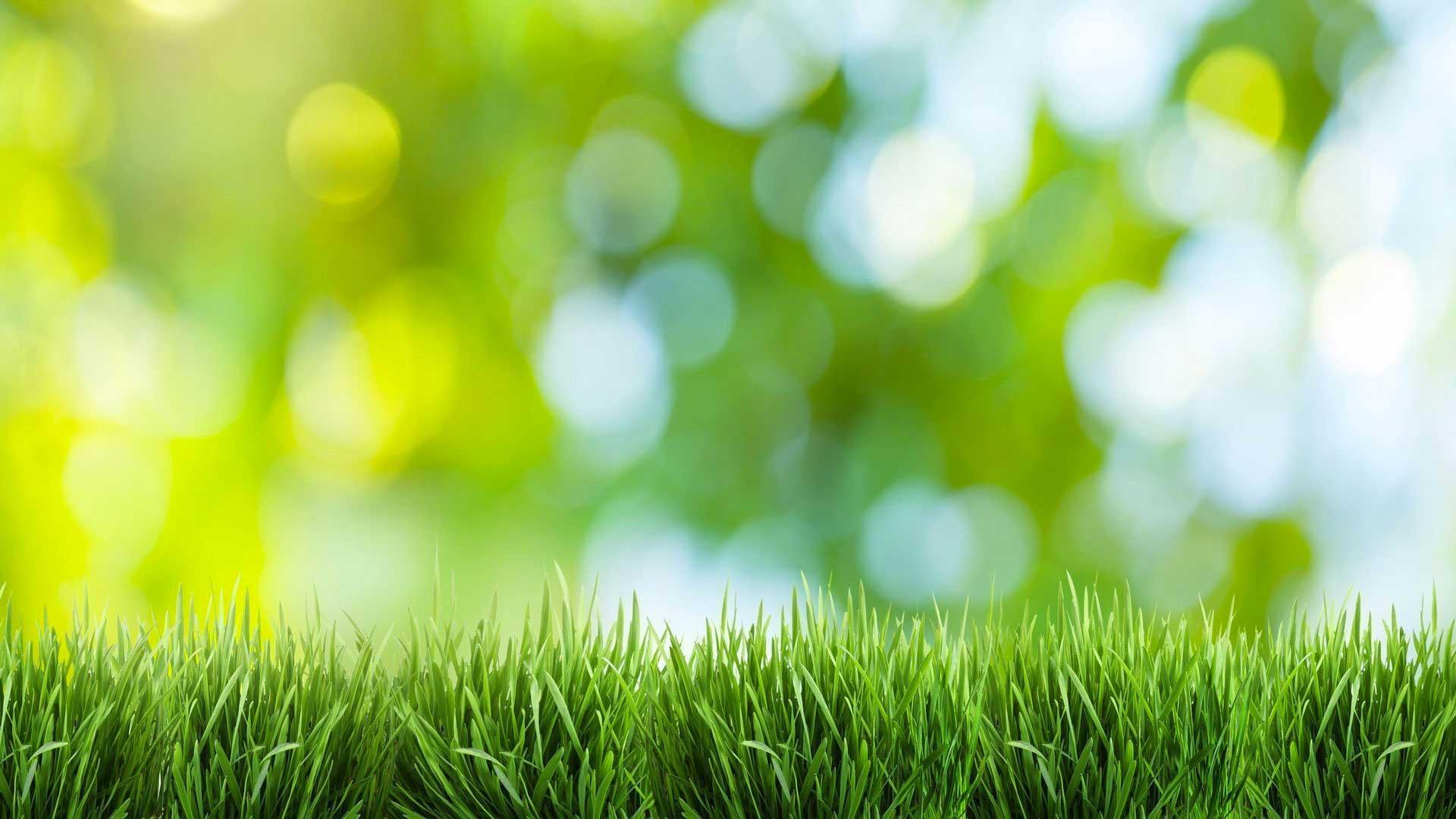 Organic Nature Lawn Care