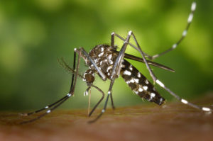 keeping-your-family-healthy-mosquito