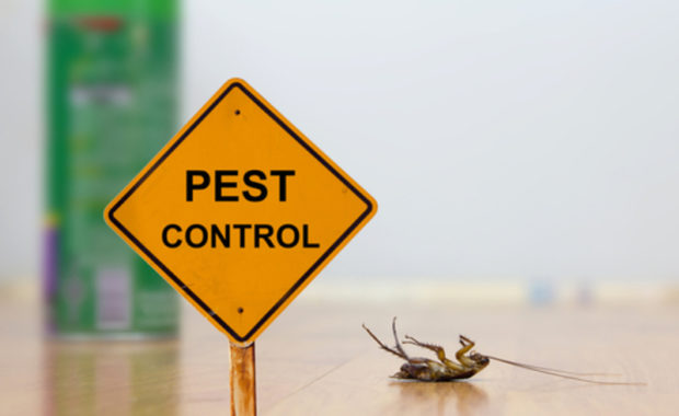 Should You Hire a Pest Control Company or Do It Yourself?