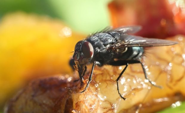 Successful Methods in Pest Control