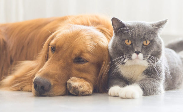 Why Should You Get Rid of Bud from your Pet?