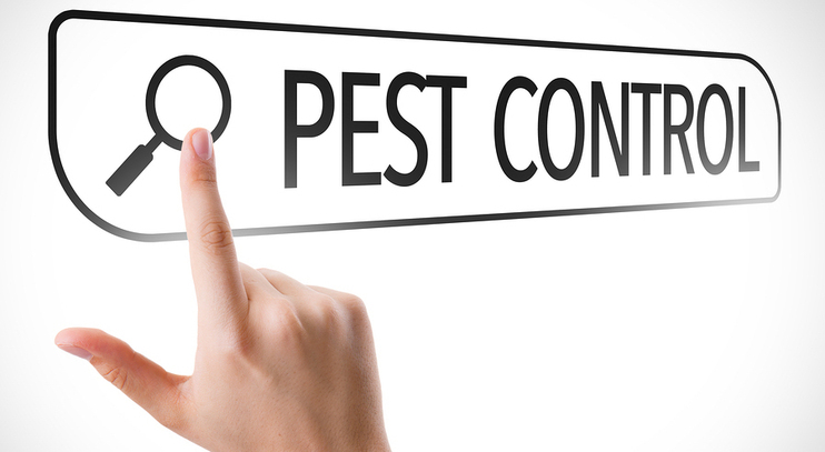 Tips for Choosing a Pest Control Company