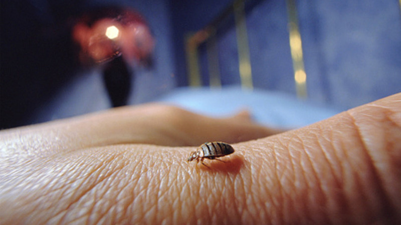 What you should know about bed bug?