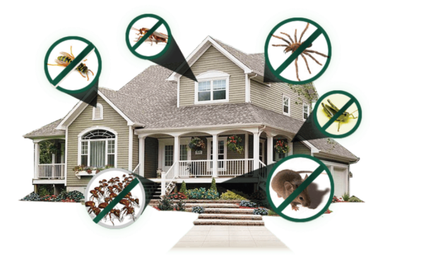 Damaging Effects of Pests By: Parsons PC