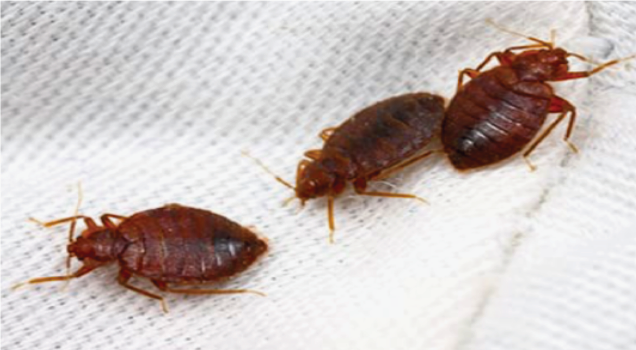 5 Ways To Control Bed Bugs