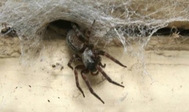5 Ways to Get Rid Of Spiders